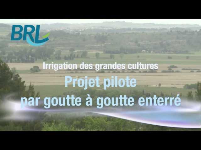Irrigation des grandes cultures - Projet pilote par goutte à goutte