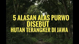 Video 5 reasons why the purwo base is called the most haunted forest in Java MP3, 3GP, MP4, WEBM, AVI, FLV Februari 2018
