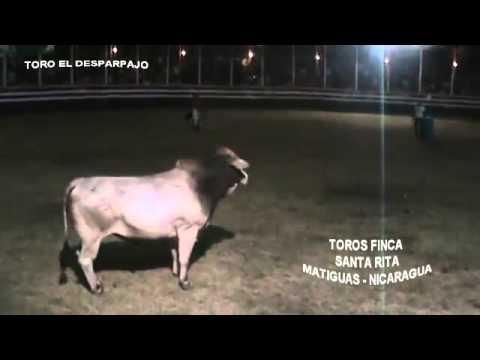 TOROS FINCA SANTA RITA.  MATIGUAS -  NICARAGUA