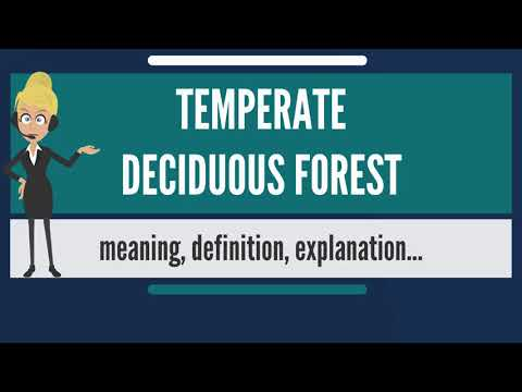 What is TEMPERATE DECIDUOUS FOREST? What does TEMPERATE DECIDUOUS FOREST mean?