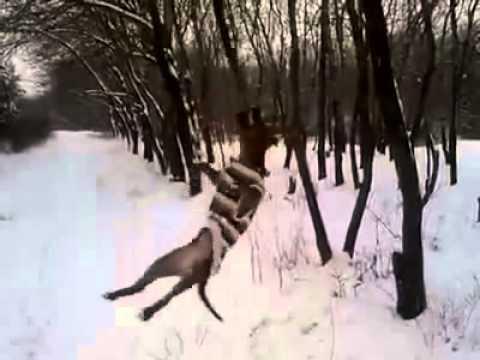 pitbull-contro-albero-109
