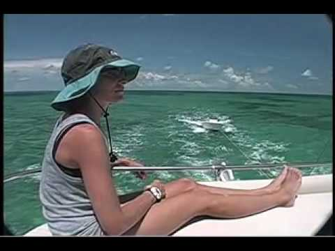 Bahamas Dolphins Research - Part 1