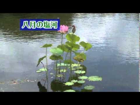 八月の塩河動画