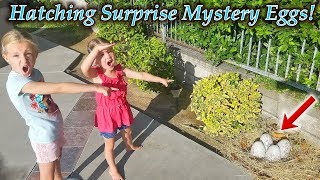 Video Mystery Eggs Found by Pool Hatch!!! Hatchimals Mystery Eggs! (New Pets) MP3, 3GP, MP4, WEBM, AVI, FLV Agustus 2018