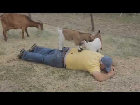 Смешные животные. 3 выпуск