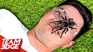 Don't Flinch! | Dangerous Live Animals!!