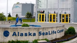 Seward (AK) United States  city images : Alaska SeaLife Center, Aquarium in Seward, Alaska, United States