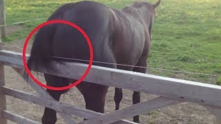 Video Electric fence horse MP3, 3GP, MP4, WEBM, AVI, FLV Mei 2017