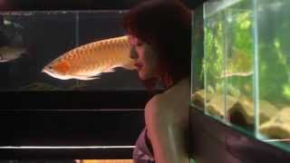 Nonton Cold Fish   Trailer Film Subtitle Indonesia Streaming Movie Download
