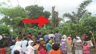 Video Dikira Cuma Pohon Biasa, Tiba² Warga Terkejut Saat Lihat Ada Keanehan! Mengejutkan! MP3, 3GP, MP4, WEBM, AVI, FLV November 2018