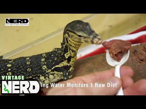 Feeding Water Monitors 1 Raw Diet