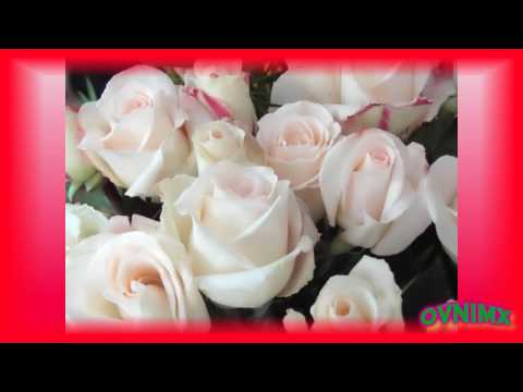 Los Daddys - Rosas Sin Espinas