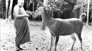 Ajahn Chah - The Path To Peace
