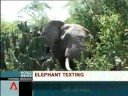 Elephant sends sms messages to rangers