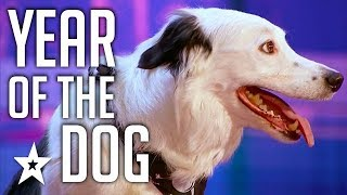 Video Celebrating THE BEST DOG AUDITIONS & TRICKS EVER  On Got Talent From Around The World MP3, 3GP, MP4, WEBM, AVI, FLV April 2019