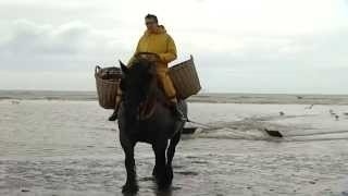 Erfgoedprijs 2015 - genomineerde Garnaalvissers te paard Oostduinkerke