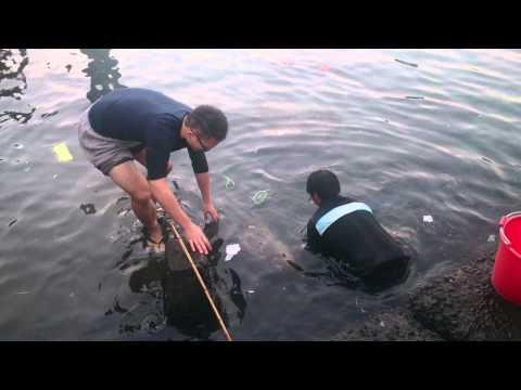 原來基隆海鮮都是這樣抓的啦