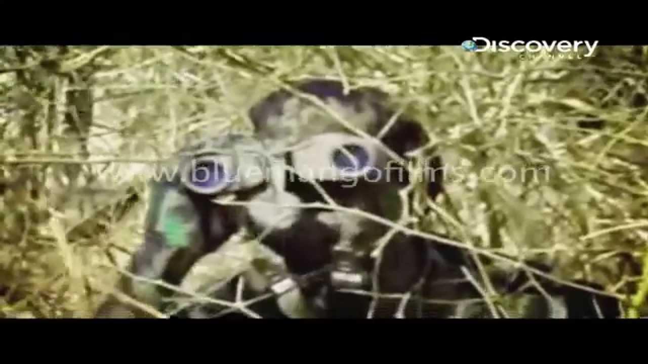 video87