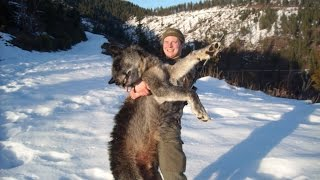 Nonton 2016 Idaho Panhandle Wolf Hunting Brandon Pitcher  The Effects Of Wolves  Film Subtitle Indonesia Streaming Movie Download