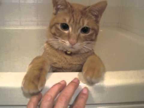 浴缸裡的小貓咪突襲主人手指後慢慢下降裝沒事,那表情太萌我忍不住重看幾十次!