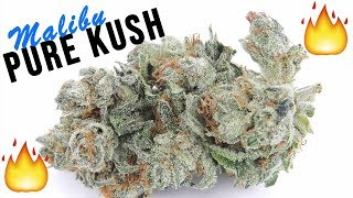 STRAIN REVIEW: '91 EPIC MALIBU PURE KUSH by The Cannabis Connoisseur Connection 420