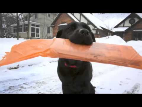 Dog delivers Daily Herald in Glen Ellyn