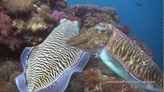 Scuba Diving İn The Similan Islands