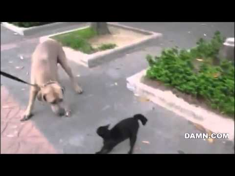 Dog is about to kill this kitten but watch who jumps in to rescue it