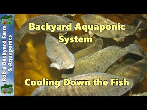 Backyard Aquaponic IBC System Update – Cooling Down the Fish 11th January 2013