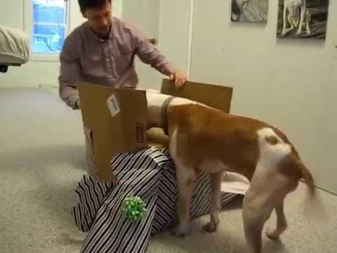 狗狗收到禮物時快要滿出來的喜悅