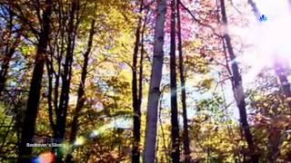 Video ERNESTO CORTAZAR - Beethoven's Silence MP3, 3GP, MP4, WEBM, AVI, FLV Agustus 2018