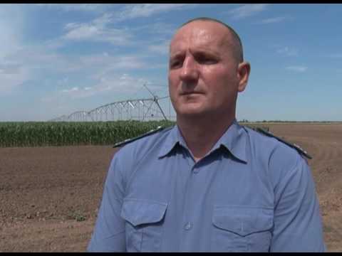 О вреде дикого полива на орошаемых землях в Ростовской области