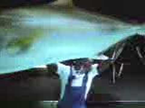 Yellow Pages - Shark Attack - Banned Commercials