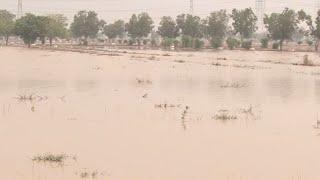 Rainwater inundates Saadi Town the heavy rain submerged saadi town & saadi garden following the heavy rainfall in different...