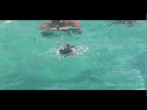 bassotto, grande nuotatore!