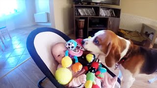 Dog Steals Baby's Toy, Later Feels Guilty And Offers The Best Apology Ever