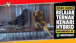 Video KISAH SUKSES : Mari Belajar Ternak Kenari Hybrid Mr.Hassan BAHUREKSO BIRD FARM MP3, 3GP, MP4, WEBM, AVI, FLV Desember 2018