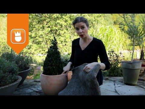 Winterschutz für Kübelpflanzen   OBI Gartenzeit