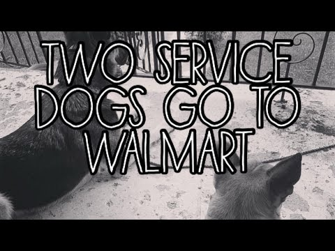 Two Service Dogs go to Walmart