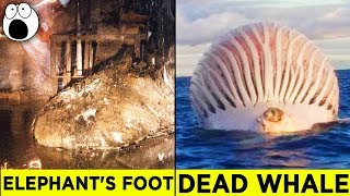 Video Top 10 Alarming Discoveries You'll be Glad You Didn't Make MP3, 3GP, MP4, WEBM, AVI, FLV Desember 2017