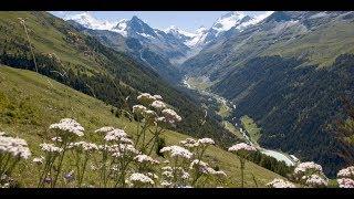 GrimentzValaisGrimentz fica a 1.570 metros de altitude, no Val d'Anniviers valesano. Esta vila é um verdadeiro álbum de fotos, famosa por seus graneis enegrecidos, queimados de sol, e por seus inúmeros gerânios rubros, espalhados pelas jardineiras do local.Grimentz, a pitoresca vila de Valais, pertence a Anniviers, no vale com o mesmo nome. Um passeio pela vila revela todo o charme da mesma, localizando-se no centro a casa burguesa do ano de 1550. Em sua adega, amadurece um vinho de geleira branco em pipas antigas de lariço – uma especialidade de vinho dos antigos agricultores nômades.No Val d'Anniviers, 100 quilômetros de percursos pedestres e ciclovias atraem para a natureza. Na base da geleira Moiry é possível observar diversas formas geomorfológicas, bem como montes de argila cobertos de gelo e pedras de geleiras. No inverno, a estância de esqui atinge até 3000 metros de altura. Um parque de diversões, opções de circuitos, trilhas de cross-country, percursos de tobogã e pedestres completam a oferta.Grimentz - Avec son offre élargie d'activités (Randonnées, escalade, Via Ferrata), son restaurant et son décor saisissant, la région de Moiry toute entière est devenue une destination phare du Val d'AnniviersL'imposant Barrage de Moiry, haut de 148 mètres, règne en maître au fond du Vallon de Moiry. Lorsque l'on emprunte la route de 8km qui le relie à Grimentz, on est d'abord visuellement frappé par cette masse de béton. Mais une fois au sommet du mur, on découvre un panorama éblouissant et un éventail varié d'activités et de curiosités, dont :un restaurantune via ferrataun glacierune cabaneun alpageun site d'escaladeVisites guidées de l'intérieur du barrageJour/heure : De mi-juin à fin-septembre Visites possibles tous les mardis à 14h (sur inscription)Rendez-vous : Devant le restaurant du barrage Durée de la visite : Entre 1h00 et 1h30 Inscriptions : Jusqu'à la veille à 16h : Office du Tourisme de Grimentz - +41(0)27 476 17 00Tarifs : Adulte : CHF 9.-Enfant : CHF 7.-