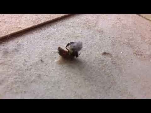 Mehiläinen pyörittelee pölypalloa – Jumppatuokio!