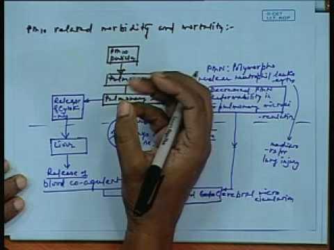 Lec-30 Gesundheitliche Auswirkungen von Luftschadstoffen Teil-2