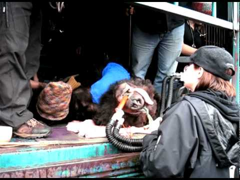 Moon Bear Rescue - Shandong<br>Province, China  2010 Part 2