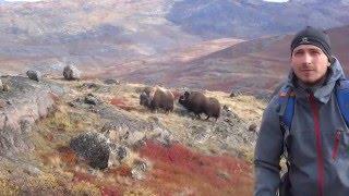 Grenlandia, prawdopodobnie nieco inna, niż większość ludzi wyobraża sobie tę wyspę. Zdjęcia oraz sceny pochodzą z...