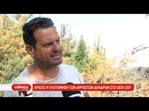 Άρχισε η υλοτόμηση των άρρωστων δένδρων στο ΣΕΙΧ-ΣΟΥ | 6/6/2019 | ΕΡΤ
