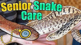 How to Identify and Care for Older Snakes by Snake Discovery