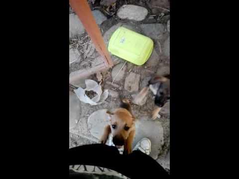 Adozione bellissime cucciolotte cercano casa