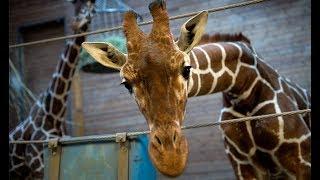 Our visit of Moscow Zoo 05/07/17Покупаете в Интернет? Экономьте деньги c кэшбек-сервисами: http://goo.gl/uyqR95 или http://bit.ly/2nVVl5WПодписывайтесь на группу!Facebook: http://fb.me/gadgetsobzorВконтакте: https://vk.com/club129351220OK: https://ok.ru/group/55251755335701Twitter: https://twitter.com/AlejandrEsquireПонравилось видео? Поддержи канал: Сбербанк/Visa/Mastercard: http://yasobe.ru/na/gopmp; Яндекс.Деньги: 41001885617243; Qiwi: https://goo.gl/jfXXFp;