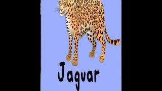 Free Animal Alphabet FlashCard YouTube video